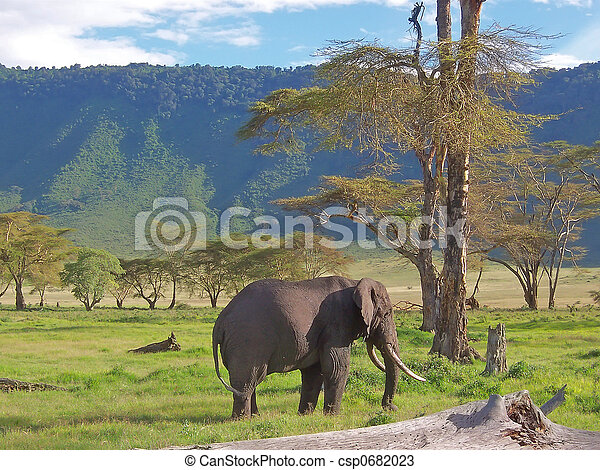 Wild elephant with tropical mountains behind in the african savanna, Ngorongoro park, Tanzania - csp0682023