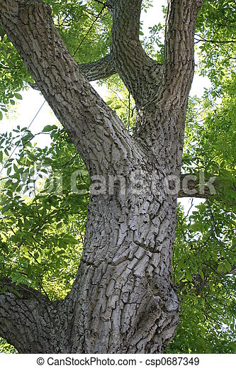 Archivi fotografici di albero tronco noce 400 anno for Tronco albero arredamento