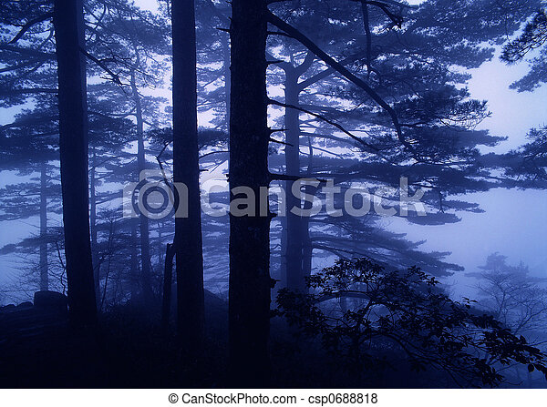forest in fog - csp0688818