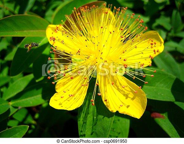 Buzzing Bee - csp0691950