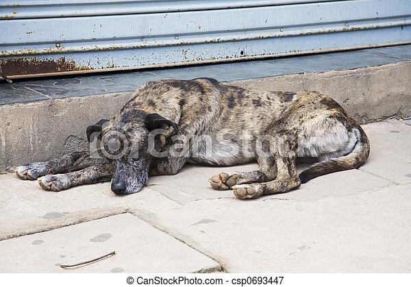 Dog - csp0693447