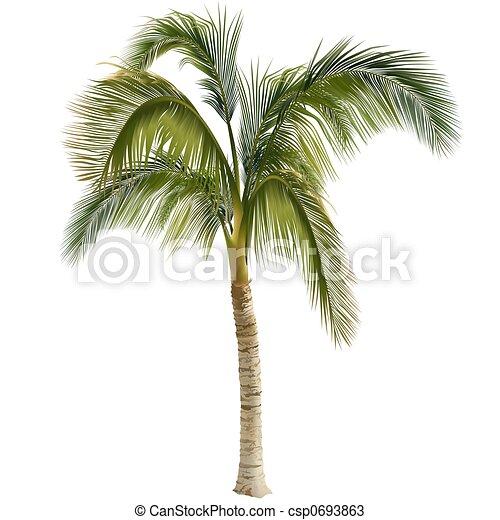 Palm tree - csp0693863