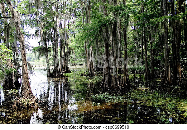 Cypress Tree With Spanish Moss - csp0699510
