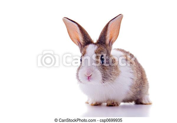 Bunny - csp0699935
