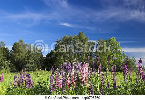 Field with Lupins - csp0706760