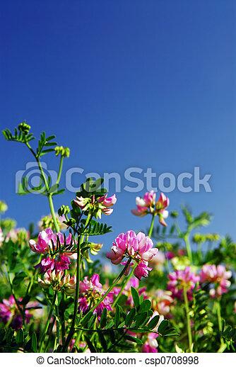 Summer meadow - csp0708998