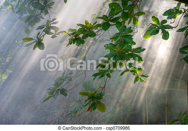 morning sunlight in vegetation - csp0709986