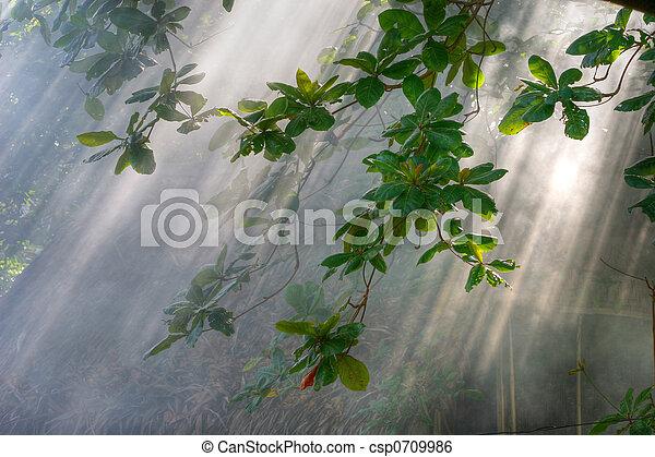 morning sunlight in vegetation - csp0709986