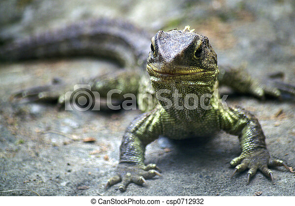 stock photo of tuatara endangered species in new zealand. Black Bedroom Furniture Sets. Home Design Ideas