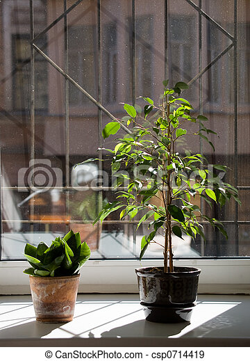 Plants on a window sill - csp0714419