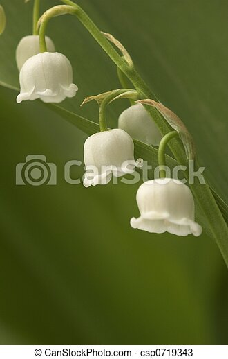 Lilly-of-the-Valley Close - csp0719343