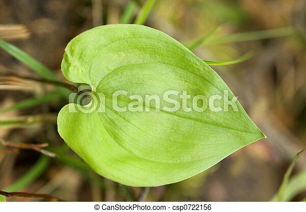 Heart-shaped Leaf - csp0722156