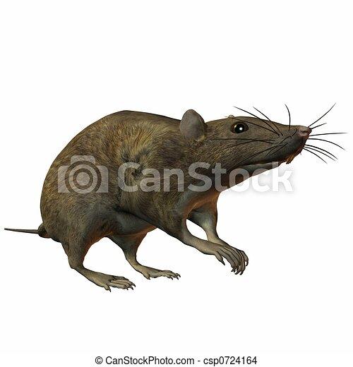 Rat - csp0724164