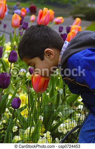 cheirando, flor - csp0724453