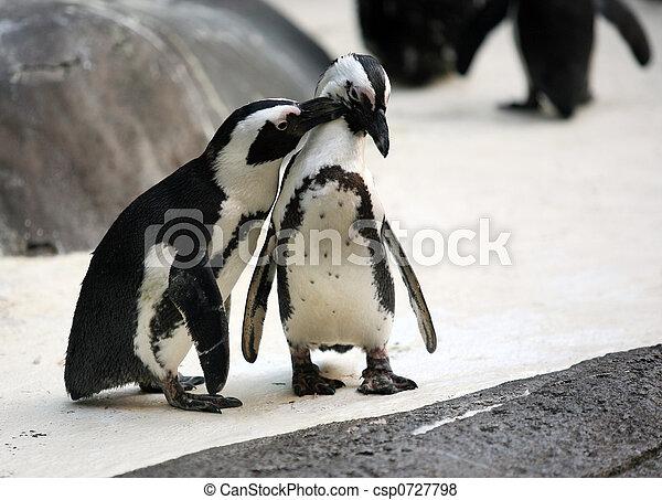 Penguin couple - csp0727798