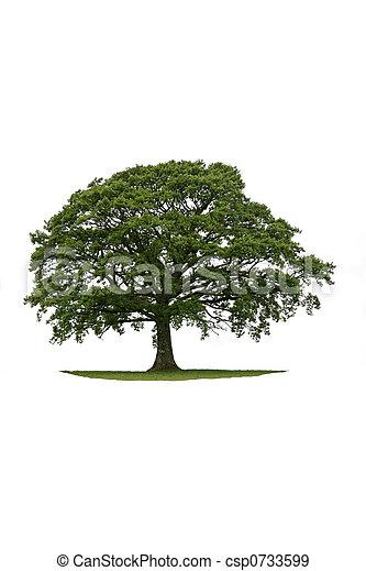 The Ancient Oak - csp0733599