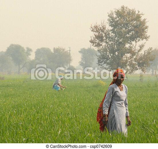 Indian woman farming - csp0742609