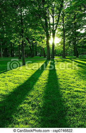 綠色, 公園 - csp0746822