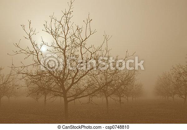 Sepia Sunrise Behind Walnut Trees - csp0748810