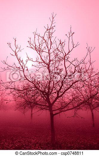 Pink Tone Bare Walnut Trees - csp0748811