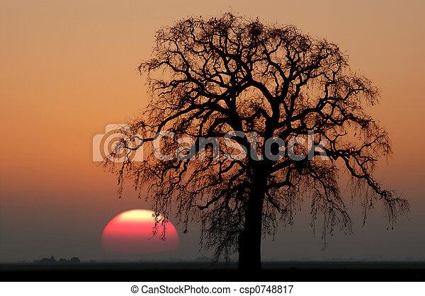 Winter Oak Tree and Setting Sun - csp0748817