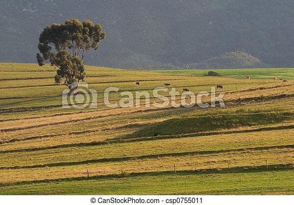 Rural landscape - csp0755011
