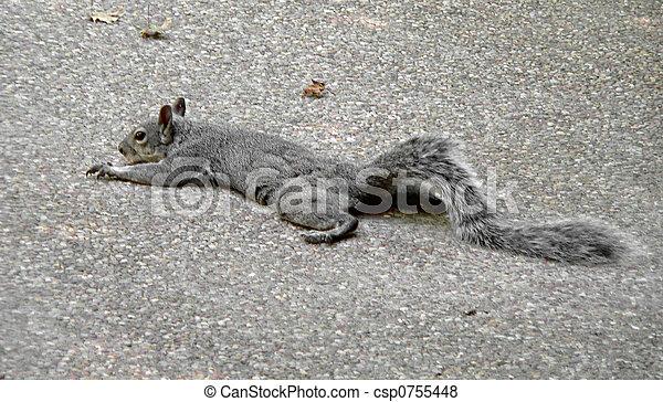 Lazy Squirrel - csp0755448