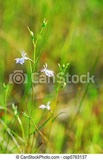 Botanical background - csp0763137