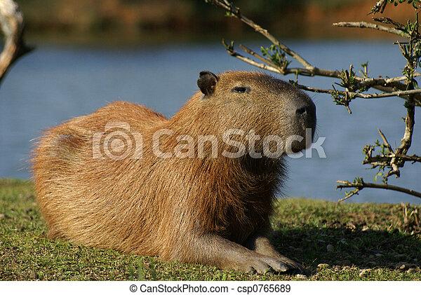 a mammal - csp0765689