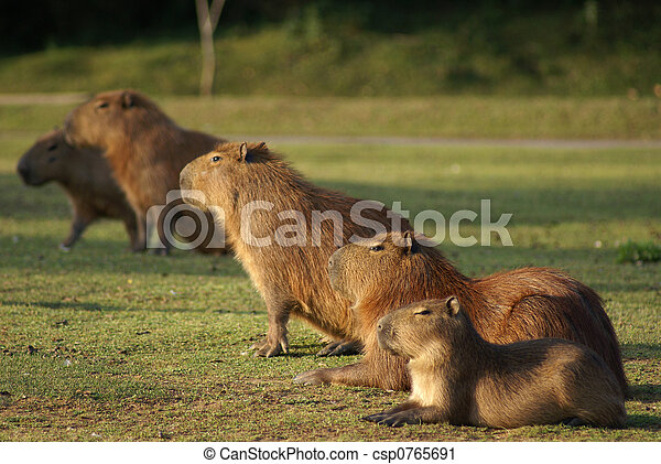 a group of mammals - csp0765691