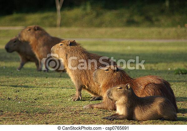 a group of mammals - csp0765691