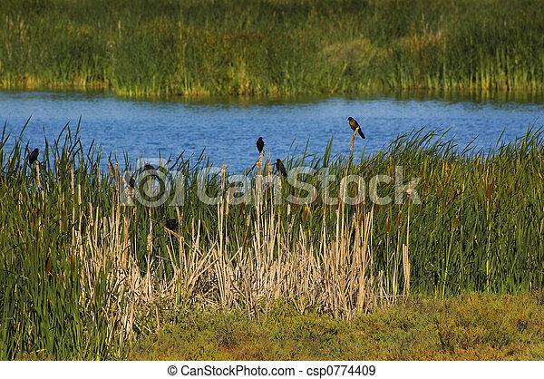 Waterbird Regional Preserve - csp0774409