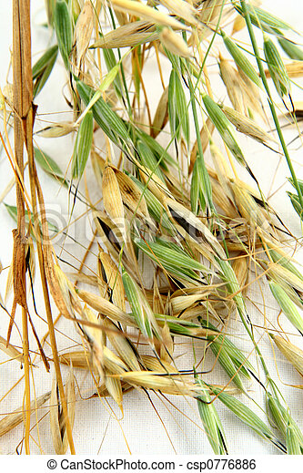Oat Backgrounds in Non-Ur - csp0776886