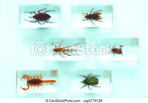 Collection of insects - csp0779128