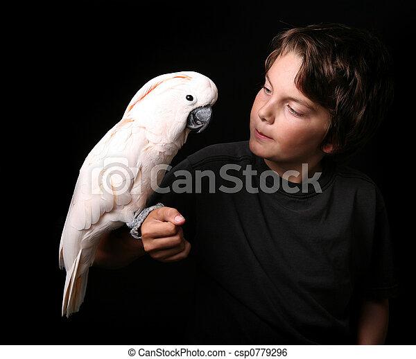 白鸚, 年輕,  moluccan, 成人 - csp0779296