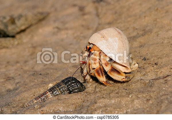 Hermit crab - csp0785305