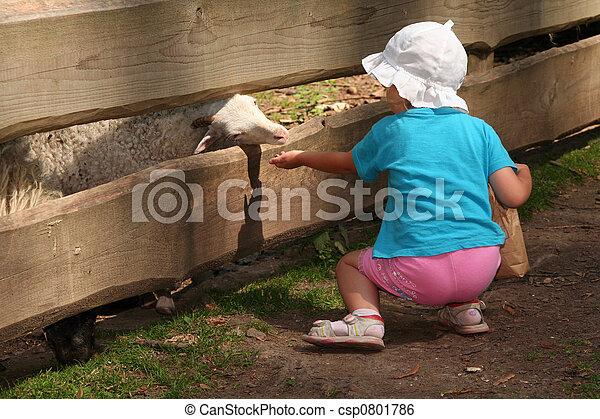 Feeding animals - csp0801786