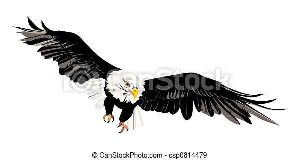 bald eagle - csp0814479