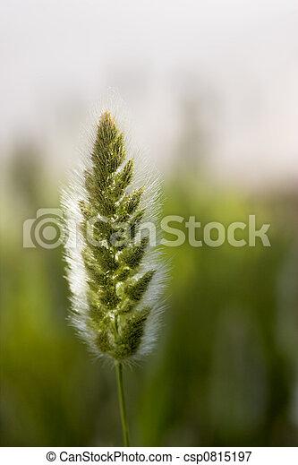 Wild vegetation - csp0815197