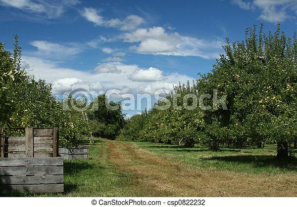 Apple Orchard - csp0822232