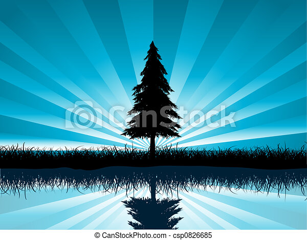 solitary fir tree - csp0826685