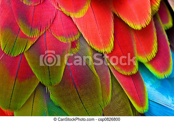 Red Feathers, Macaw - csp0826800