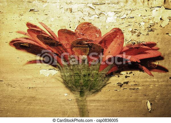 Grunge flower - csp0836005
