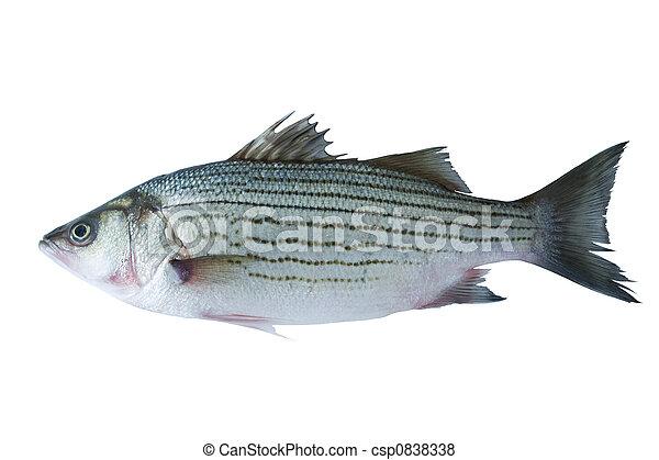 Sea bass - csp0838338