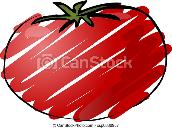 Tomato sketch - csp0838957