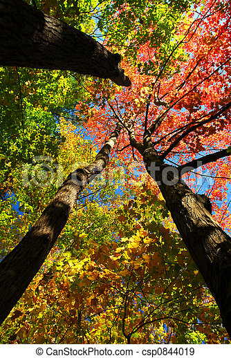 Fall forest - csp0844019