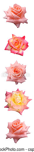 Vertical Rose Bar - csp0846190