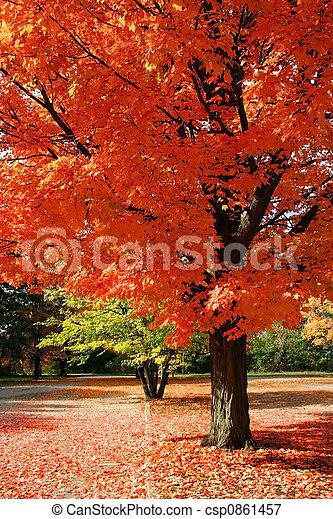otoño, rojo - csp0861457