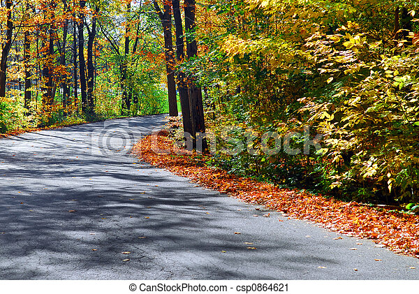 Fall forest road - csp0864621