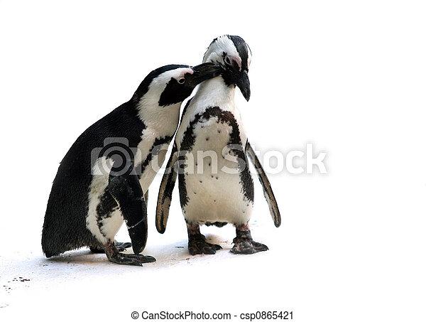 夫婦, 企鵝 - csp0865421